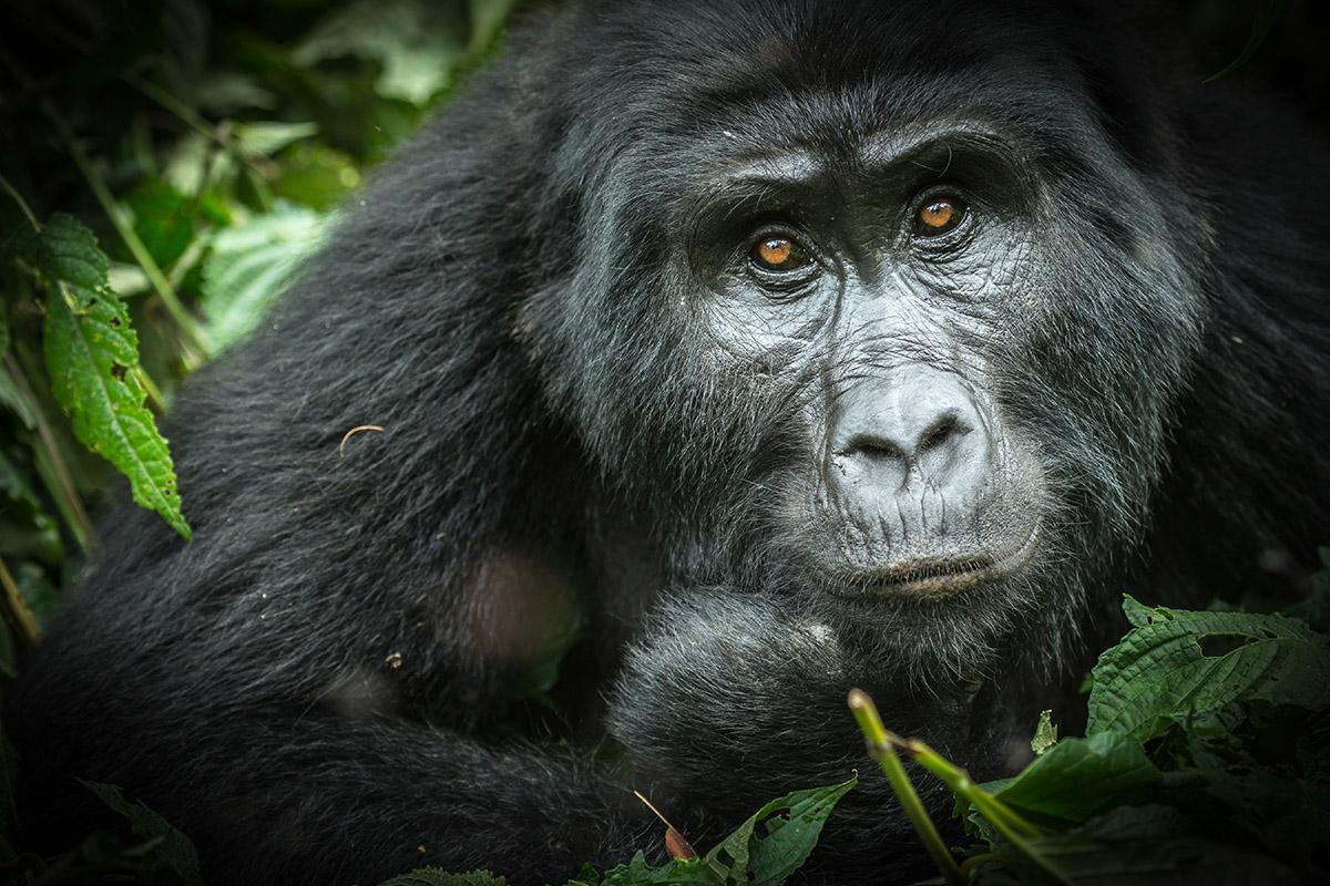 Parque Nacional de Bwindi, Uganda