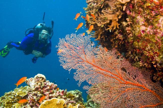 Gran Barrera de Coral, Queensland, Australia