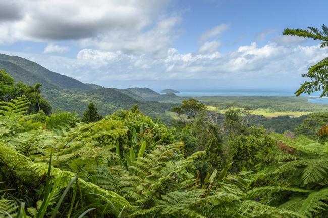 Selva tropical de Daintree, Australia