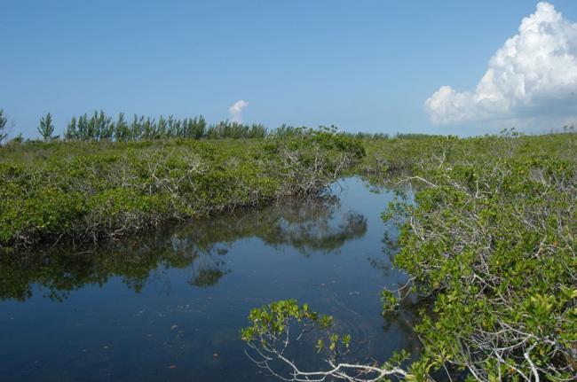 Parque Nacional Lucayan, Bahamas