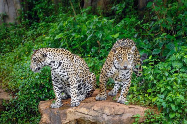 Belize Zoo, Belice