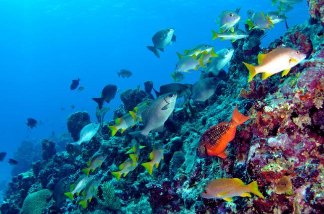 Submarinismo en Bermudas