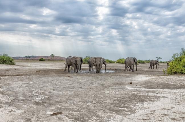 Parque Nacional del Chobe, Botsuana
