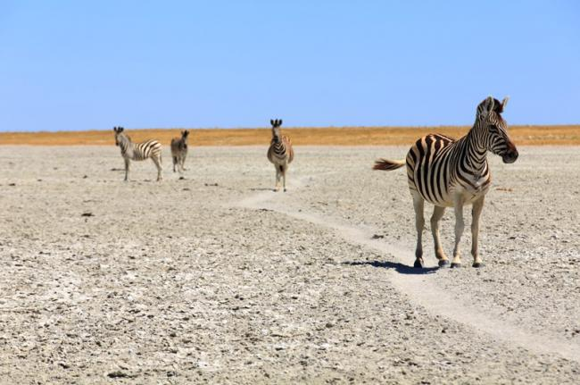 Parque Nacional Makgadikgadi, Botsuana