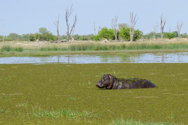 Reserva de Caza Moremi, Botsuana