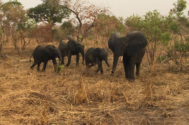 Reserva de Nazinga, Burkina Faso