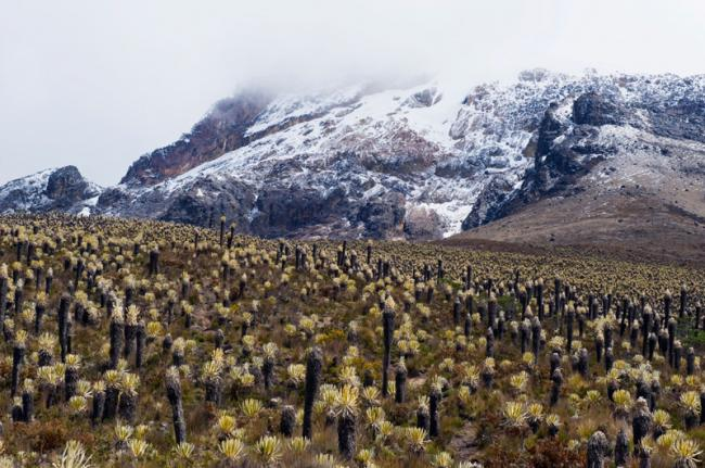 Parque Nacional Natural Los Nevados, Colombia