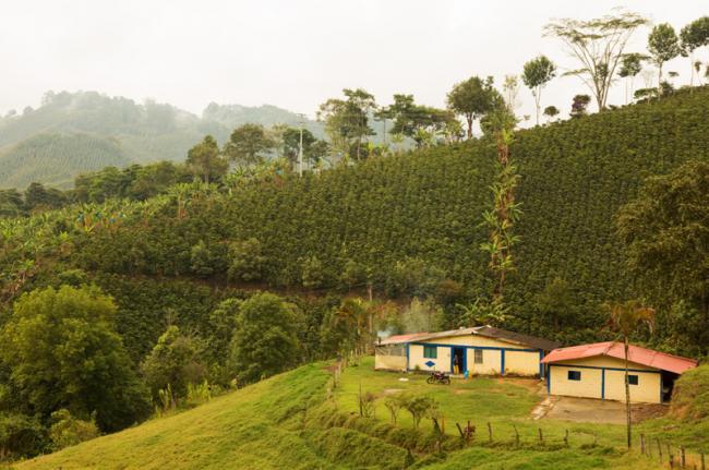 Quindio, Zona Cafetera, Colombia