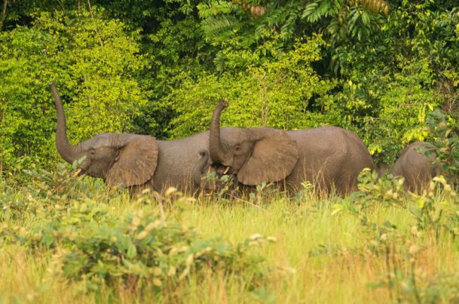 Parque Nacional Conkouati-Douli, República del Congo