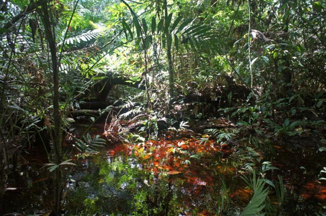 Parque Nacional Nouabalé-Ndoki, República del Congo