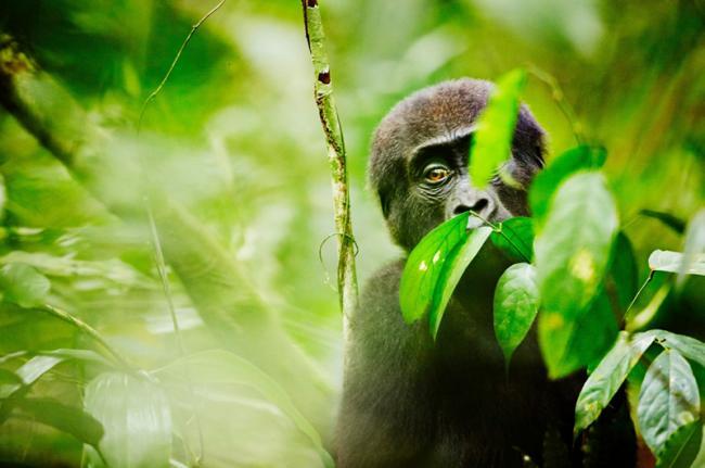 Parque Nacional de Odzala, República del Congo