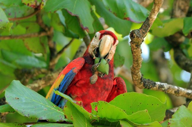 Parque Nacional Corcovado, Costa Rica