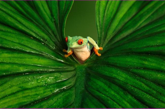 Observación de fauna, Costa Rica