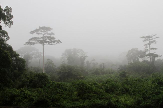 Parque Nacional de Taï, Costa de Marfil