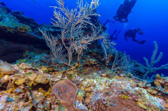 Submarinismo en el Caribe, Cuba