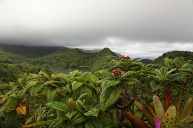 Parque Nacional Morne Trois Pitons, Dominica