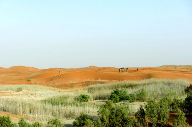 Oasis de Al-Ain, Emiratos Árabes Unidos
