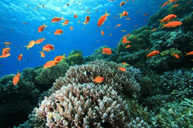 Mar Rojo, Egipto