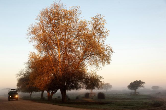 Parque Nacional de Doñana, Andalucía, España