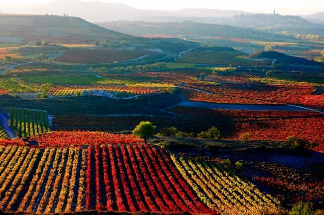 Región vinícola de La Rioja, España