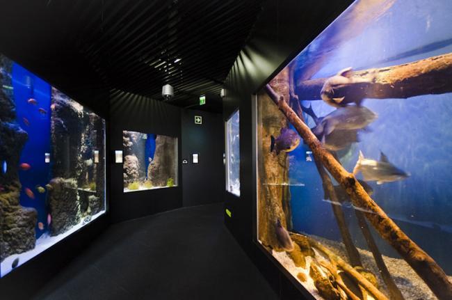 Aquarium de San Sebastián, San Sebastián, País Vasco, España