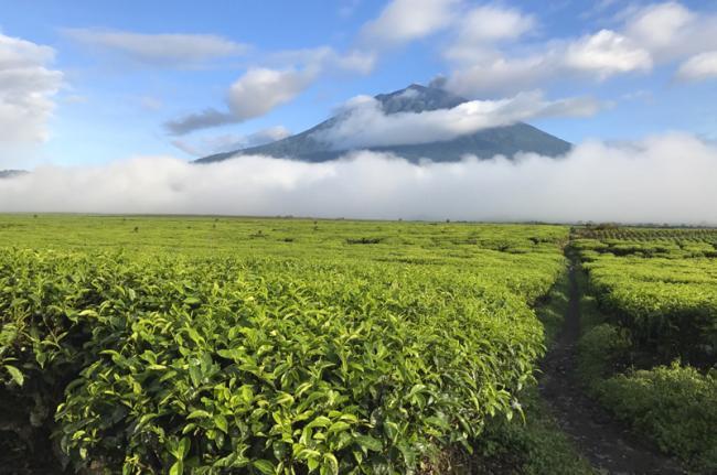 Valle de Kerinci, Indonesia