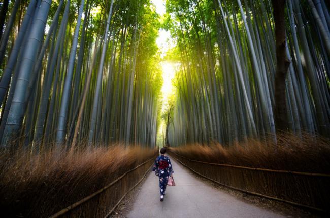 Bosque de bambú de Arashiyama, Japón