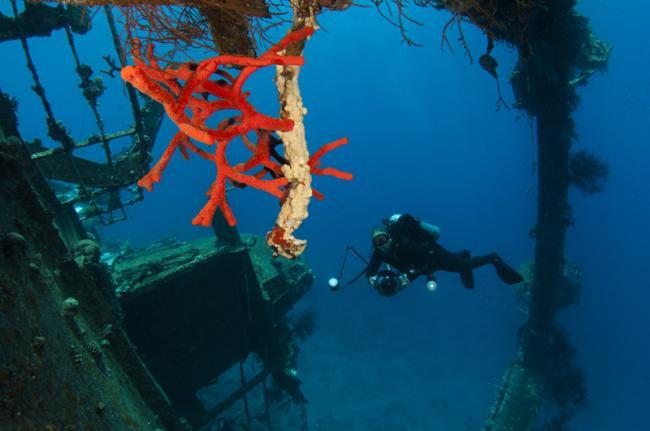 Buceo en el mar Rojo, Jordania