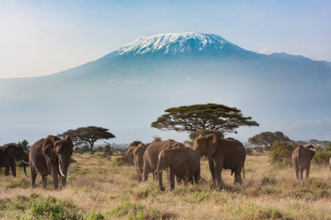 Elefantes en el Parque Nacional de Amboseli, Kenia