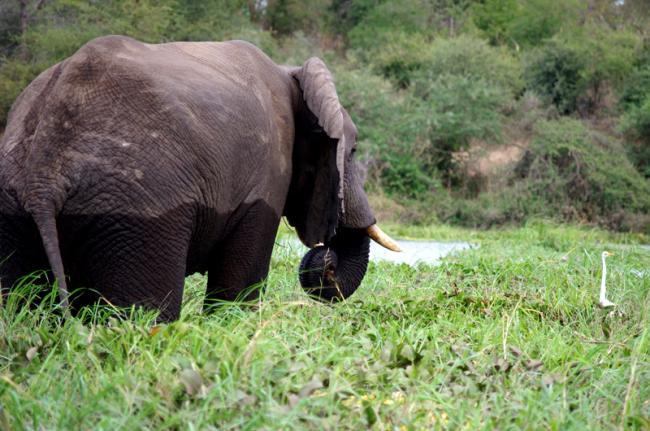 Reserva Natural de Majete, Malaui