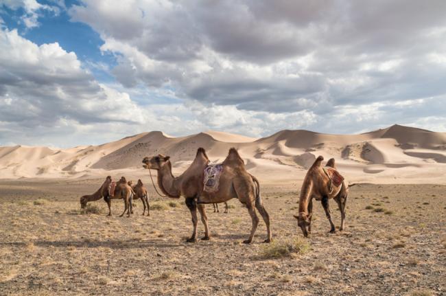 Desierto de Gobi, Mongolia