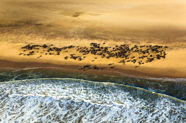 Costa de los Esqueletos, Namibia