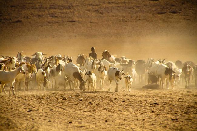 Los san, Namibia