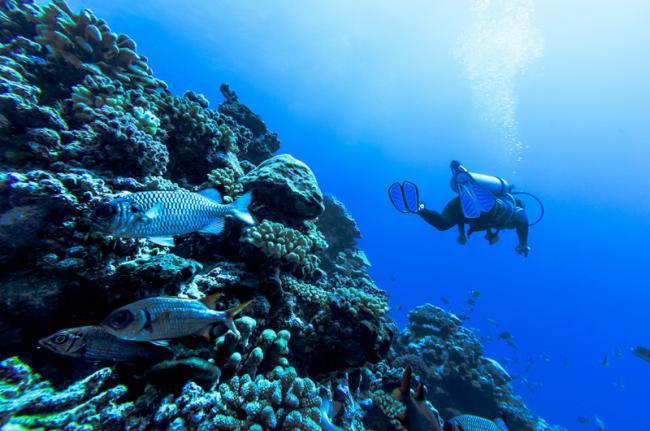 Submarinismo, Polinesia Francesa
