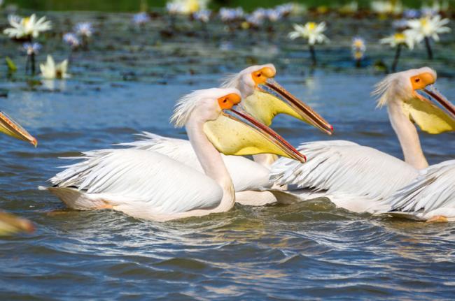 Parque Nacional de las Aves del Djoudj, Senegal