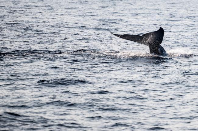 Avistamiento de ballenasen Mirissa, Sri Lanka