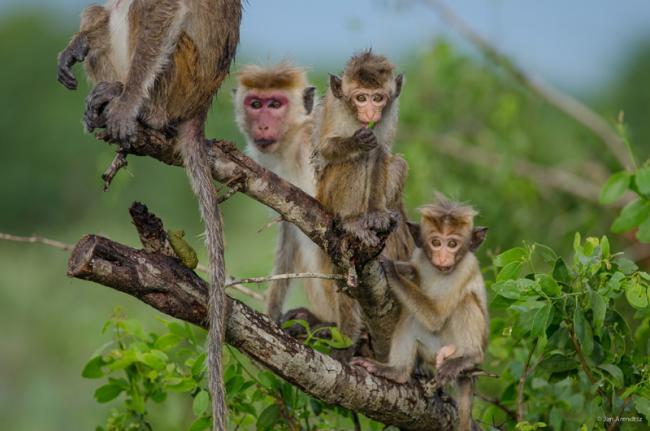Parque Nacional de Bundala, Sri Lanka