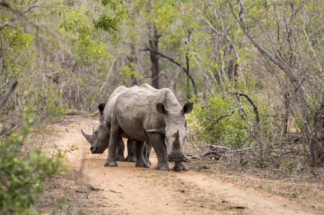 Reserva de Caza Mkhaya, Suazilandia