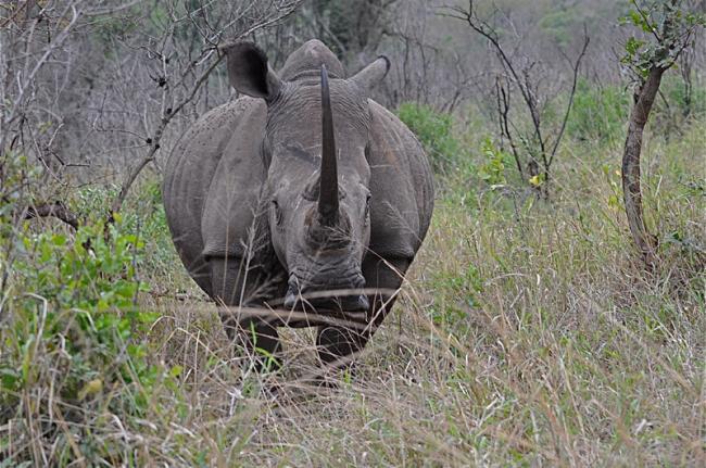 Hluhluwe-iMfolozi, Sudáfrica