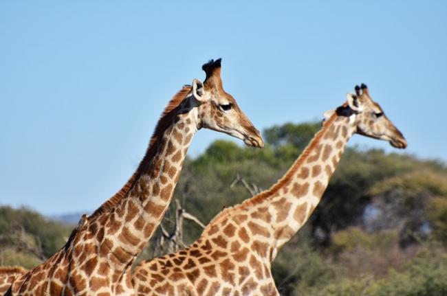 Reserva de Caza Madikwe, Sudáfrica