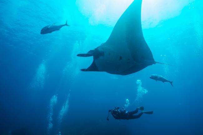Parques nacionales marinos de las islas Surin y Similan, Tailandia