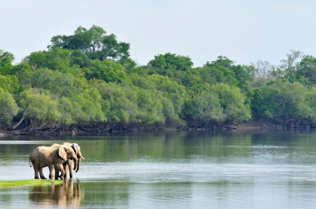 Parque Nacional Kafue, Zambia