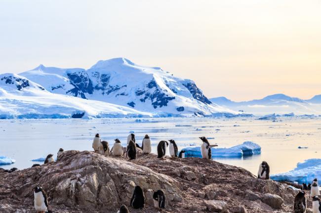 Observación de pingüinos en la bahía Neco, Antártida