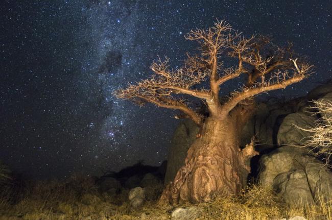 Safari de acampada, desierto del Kalahari, Botsuana