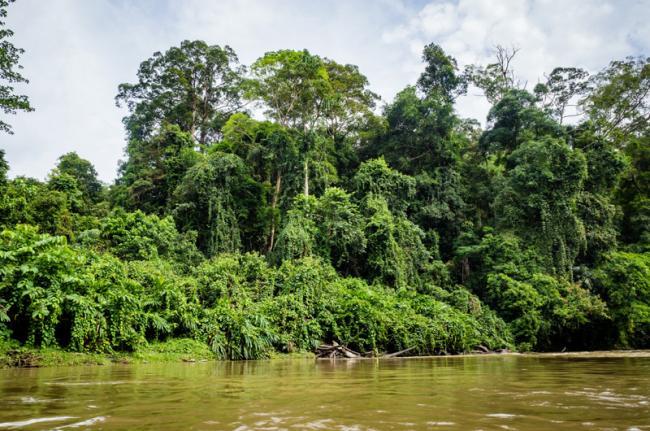 Parque Nacional de Ulu Temburong, Brunéi