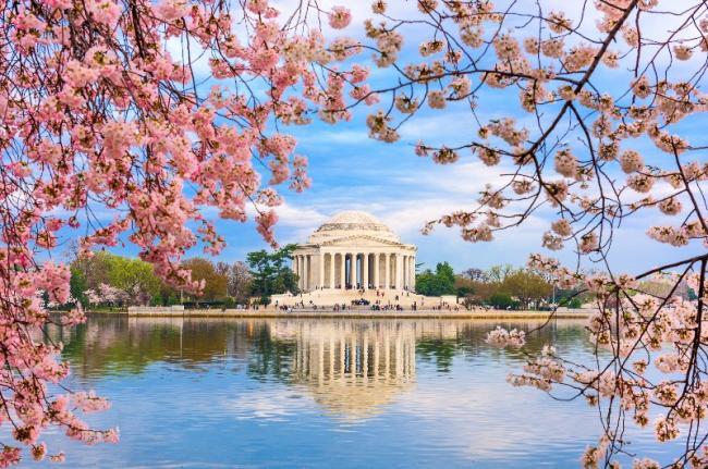 Monumento a Thomas Jefferson con cerezos en flor, Washington D.C., EE. UU.