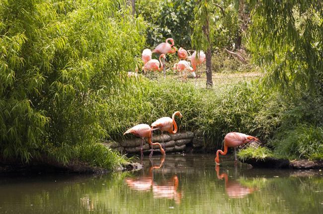 Un zoo impresionante con animales increíbles, Nueva Orleans, costa este de EEUU