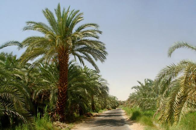 Oasis de Bahariya, Egipto