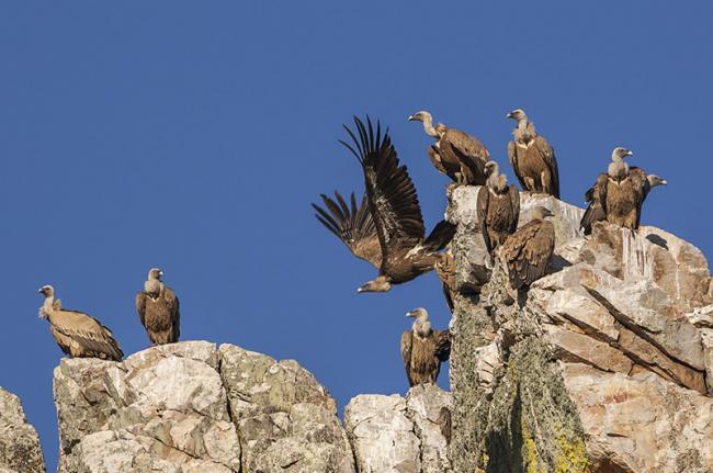 Parqne Nacional de Monfragüe, Cáceres, Extremadura, España