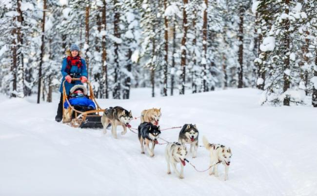 Trineo tirado por huskies, Laponia, Noruega.